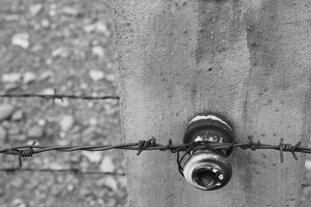 2008-Auschwitz-8