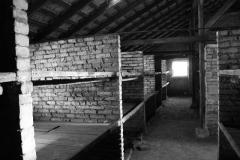 2008-Auschwitz-54