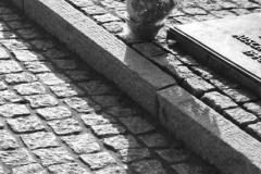 2008-Auschwitz-89