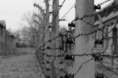 2008-Auschwitz-9