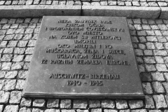 2008-Auschwitz-95