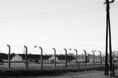 2010-Auschwitz-48
