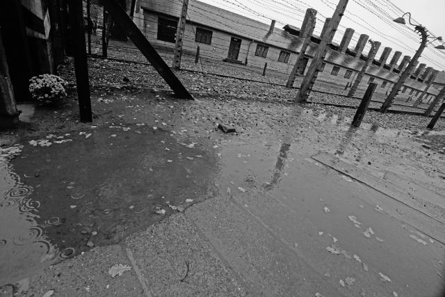 101_Auschwitz_2012
